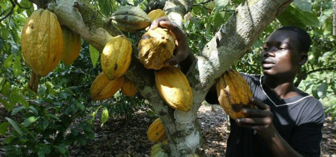 Ghana: Gold, cocoa and… vegetables? Surprise ingredient of Ghana's growing economy