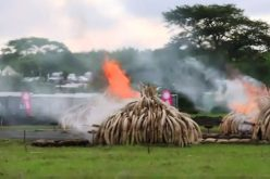 Kenya sets fire to huge ivory stockpile